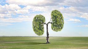 肺容量是什么?